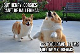 corgi ballerina